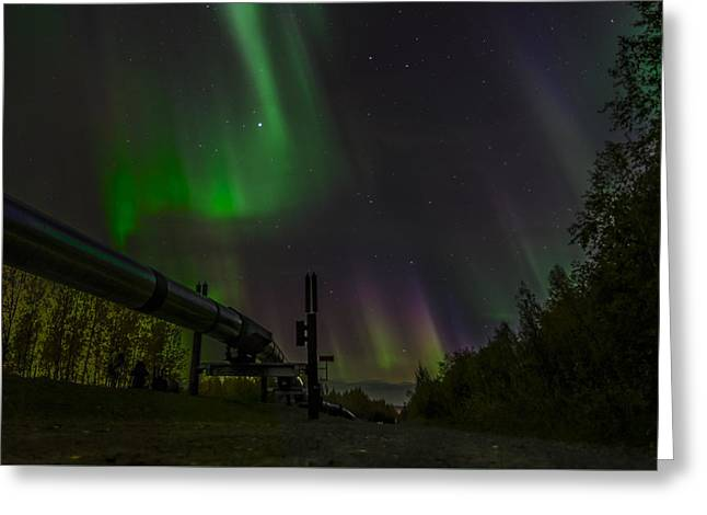 Aurora Over  Trans-alaska Pipeline Greeting Card by Robin Williams