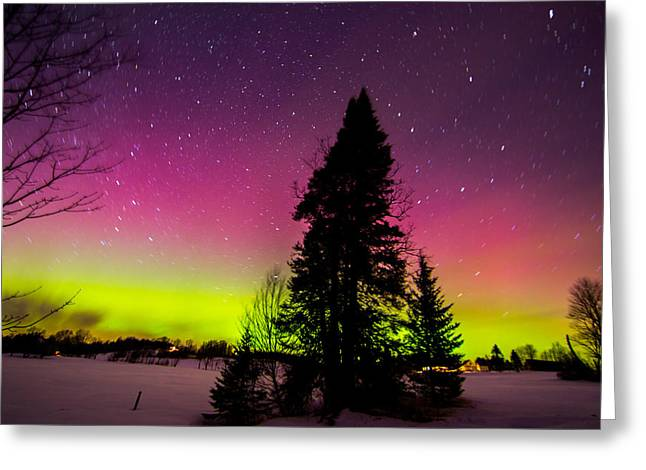 Aurora With Spruce Tree Greeting Card