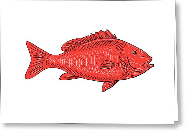 Australasian Snapper Swimming Drawing Greeting Card