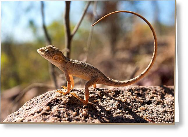 Australian Dragon Greeting Card