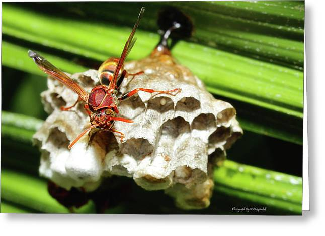 Australian Papper Wasp 772 Greeting Card