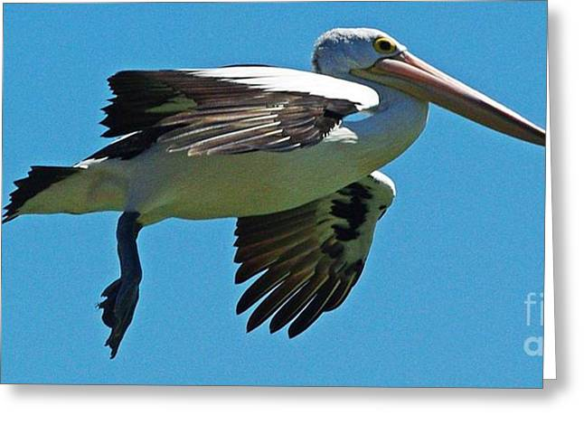Australian Pelican In Flight Greeting Card by Blair Stuart