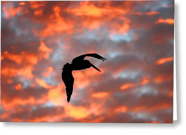 Australian Pelican Silhouette Greeting Card