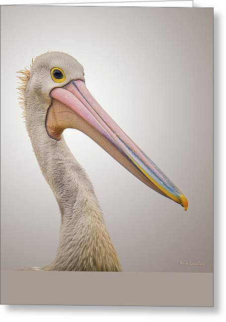 Australian Pelican Greeting Card by Wim Lanclus
