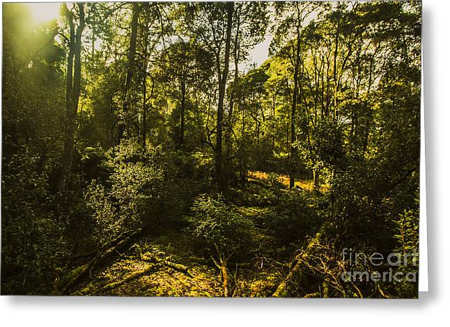 Australian Rainforest Landscape Greeting Card