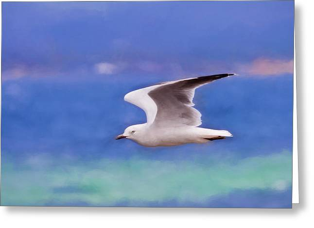 Australian Seagull In Flight Greeting Card by Michelle Wrighton