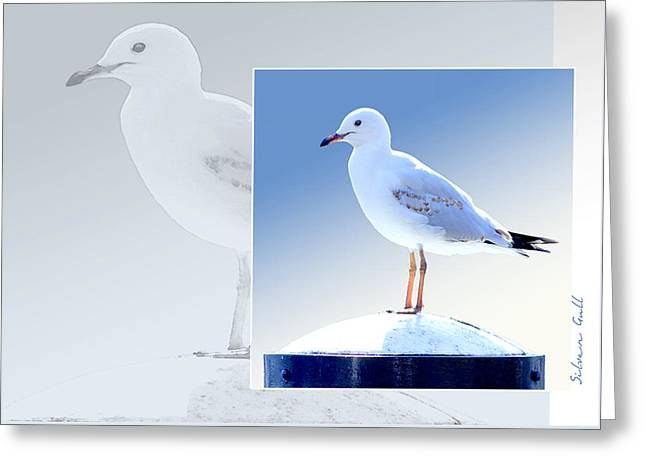 Australian Wildlife - Silver Gull Greeting Card by Holly Kempe