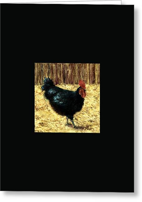 Australorp Rooster Greeting Card by Jill Musser