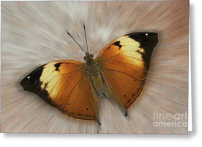 Autumn Leaf Butterfly Zoom Greeting Card