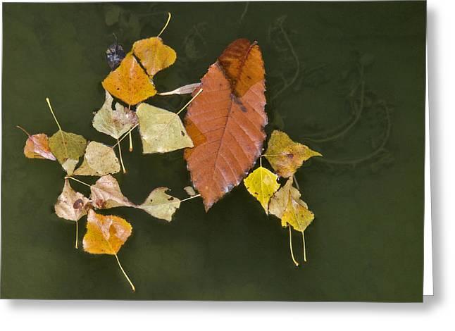 Autumn 1 Greeting Card by Kenton Smith