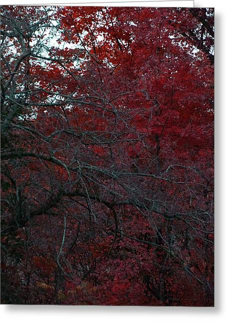 Autumn 2015 Red Trees Pa 02 Vertical Greeting Card by Thomas Woolworth