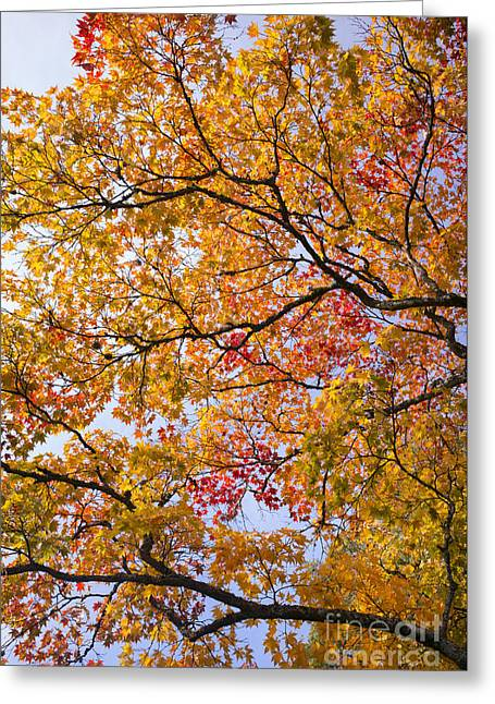 Autumn Acer Palmatum Greeting Card by Tim Gainey