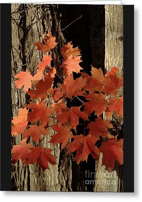 Autumn Adieu Greeting Card
