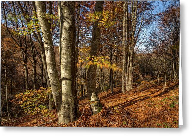 Autumn Afternoon In Forest Greeting Card by Davorin Mance