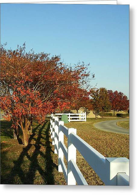 Golfcourses Greeting Cards - Autumn Afternoon with Shadows Greeting Card by Anne-Elizabeth Whiteway
