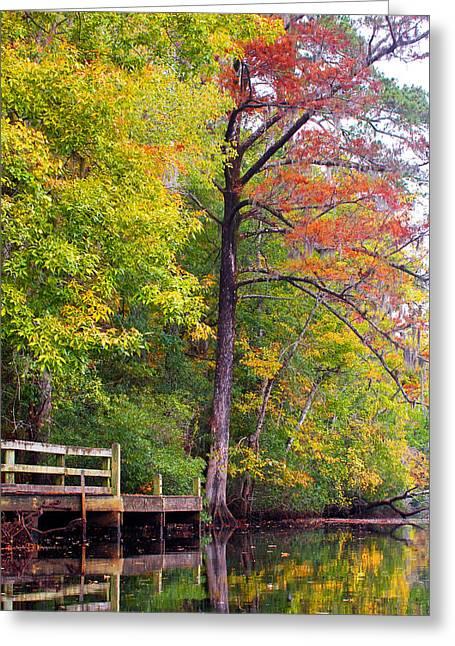 Autumn Along Brices Creek Greeting Card by Bob Decker