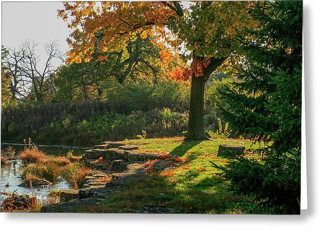 Autumn Along Deer Creek In Forest Park Greeting Card by Garry McMichael