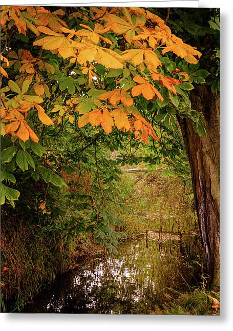 Greeting Card featuring the photograph Autumn Along The Bog Burn by RKAB Works