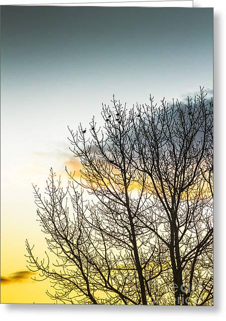 Autumn And Dusk  Greeting Card