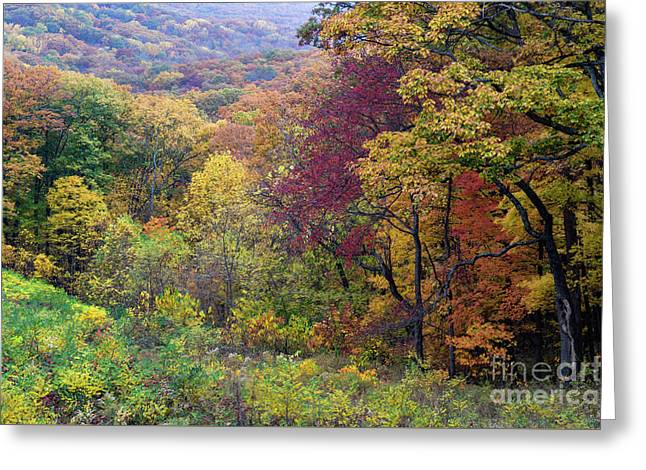 Autumn Arrives In Brown County - D010020 Greeting Card