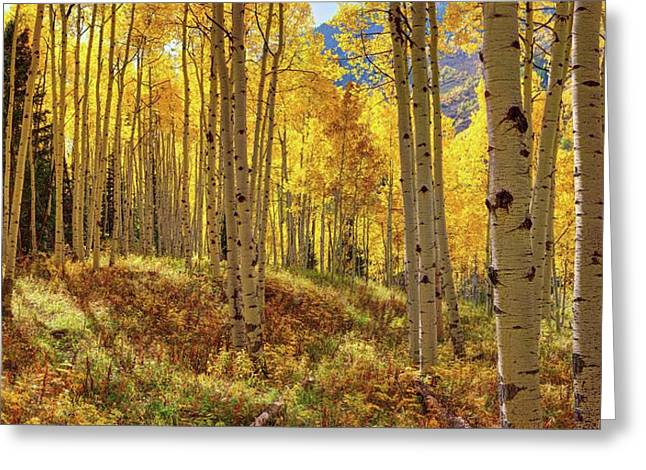 Autumn Aspen Forest Aspen Colorado Panorama Greeting Card