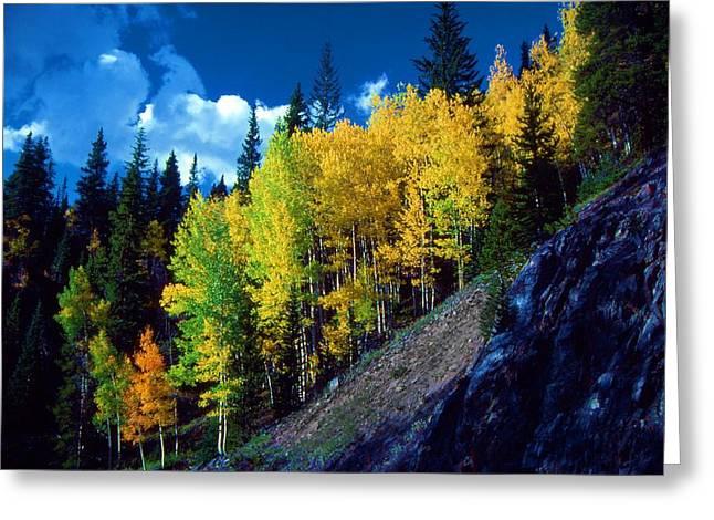 Autumn Aspen Greeting Card