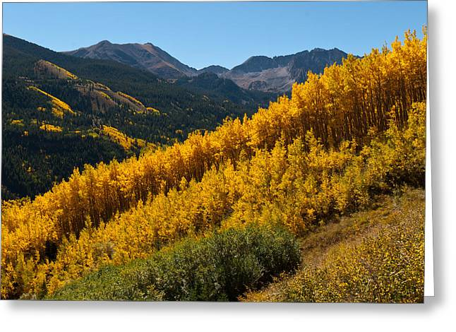 Greeting Card featuring the photograph Autumn Aspen Near Castle Creek by Cascade Colors
