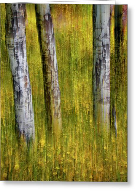 Greeting Card featuring the photograph Autumn Aspen Recollections by John De Bord