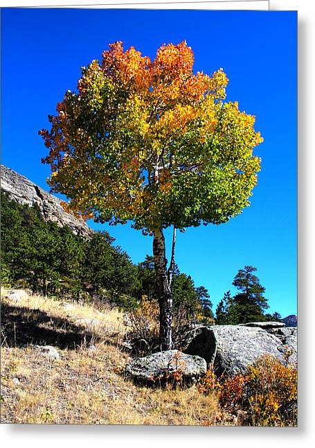 Autumn Aspen Greeting Card by Shane Bechler