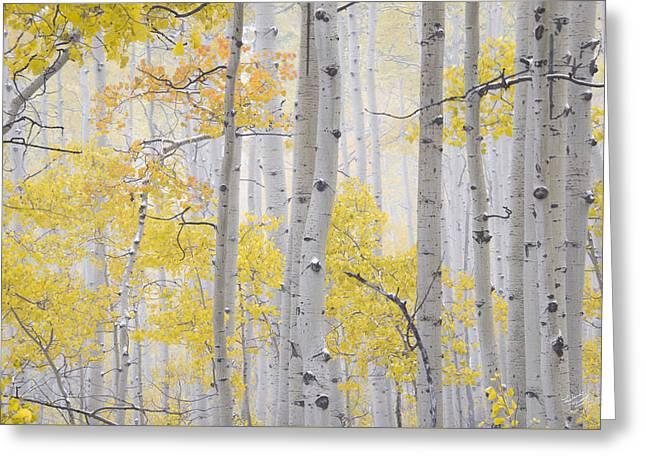 Autumn Aspens 2 Greeting Card