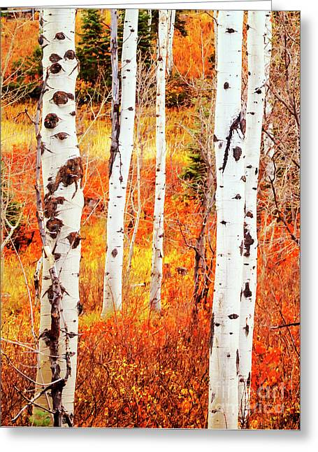 Greeting Card featuring the photograph Autumn Aspens by David Millenheft