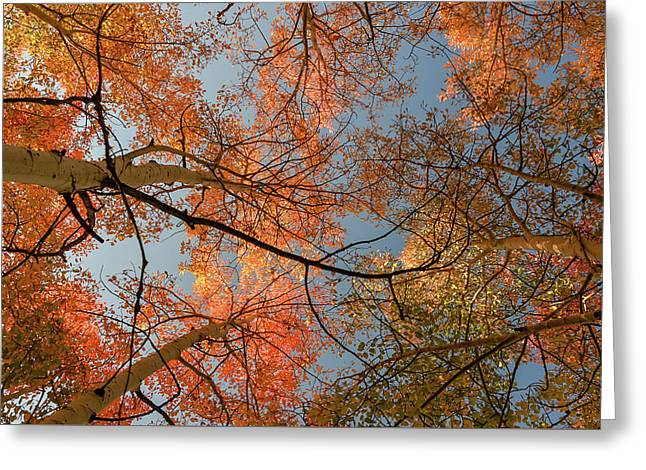 Autumn Aspens In The Sky Greeting Card