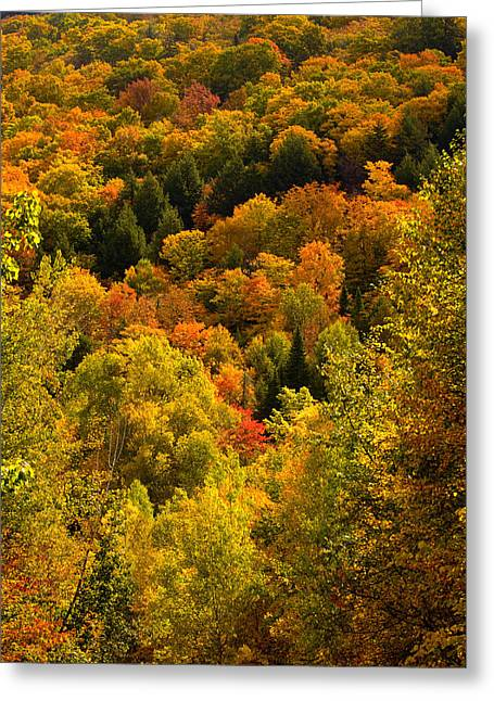 Autumn At Acadia Greeting Card
