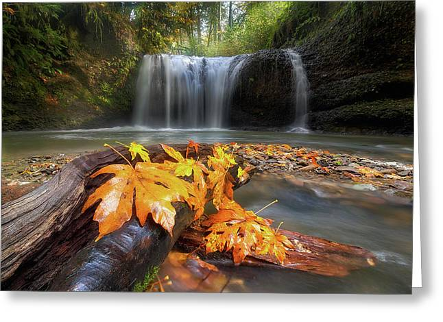 Autumn At Hidden Falls Greeting Card by David Gn