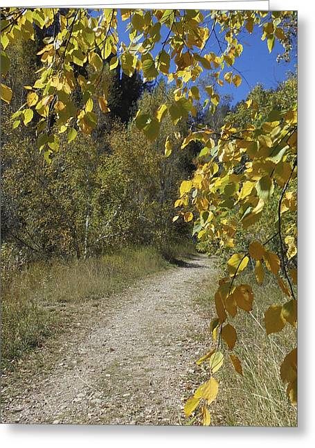Autumn At Iron Creek Greeting Card
