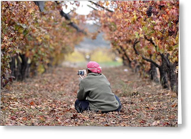 Greeting Card featuring the photograph Autumn At Lachish Vineyards 1 by Dubi Roman