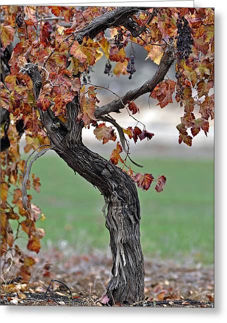 Greeting Card featuring the photograph Autumn At Lachish Vineyards 3 by Dubi Roman