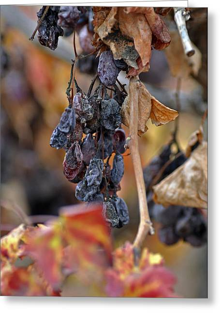 Greeting Card featuring the photograph Autumn At Lachish Vineyards 4 by Dubi Roman
