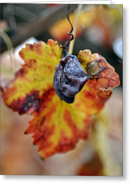 Greeting Card featuring the photograph Autumn At Lachish Vineyards 5 by Dubi Roman