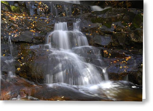 Autumn At Laurel Falls Greeting Card by Darrell Young