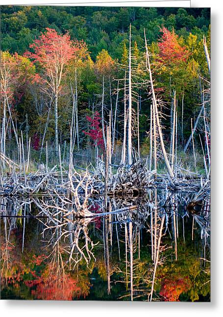 Autumn At Moosehead Bog Greeting Card