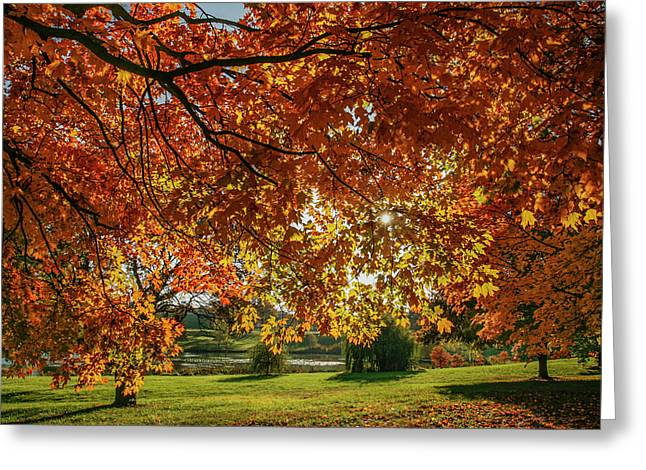 Autumn At The In Forest Park St Louis Missouri Greeting Card by Garry McMichael