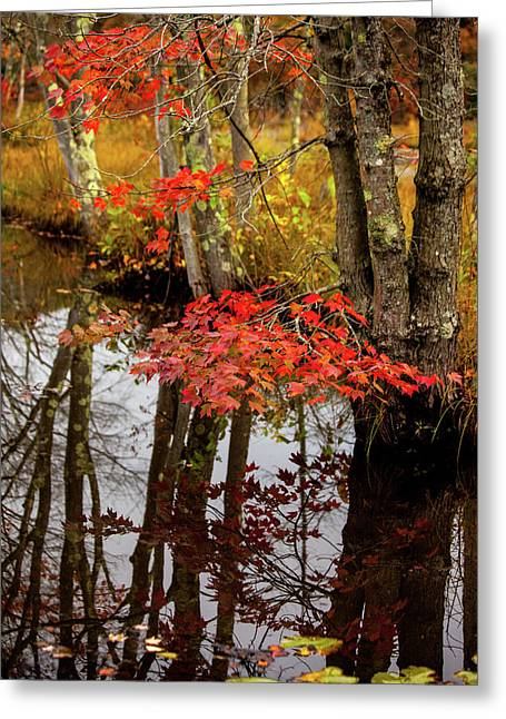 Autumn At The Pond Greeting Card by Karol Livote
