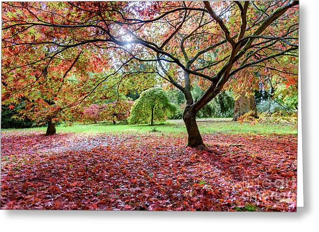 Autumn At Westonbirt Arboretum Greeting Card