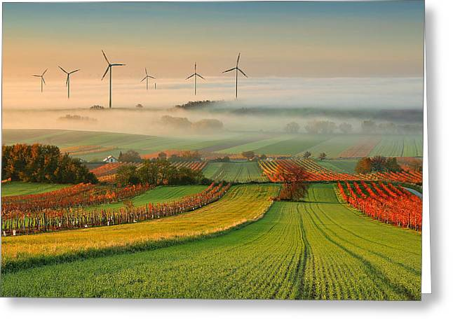 Autumn Atmosphere In Vineyards Greeting Card