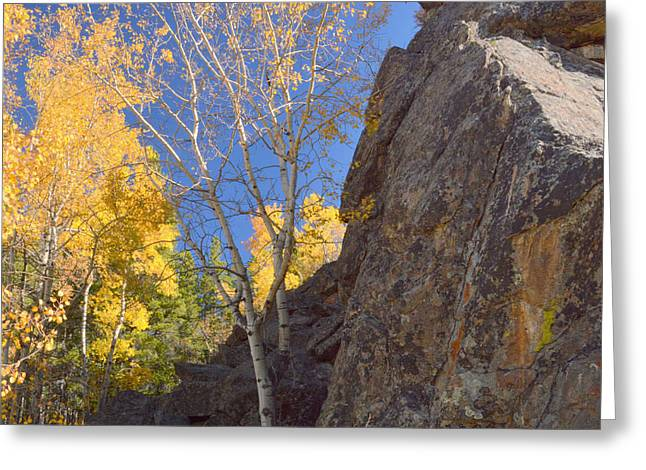 Greeting Card featuring the photograph Autumn Awakening by Al  Swasey