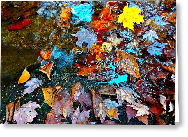 Autumn B 2015 124 Greeting Card