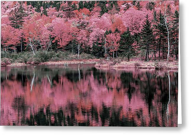 Autumn Beauty In Pink Greeting Card by Black Brook Photography