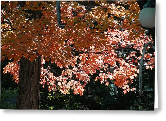 Autumn Beauty Greeting Card by Martin Morehead