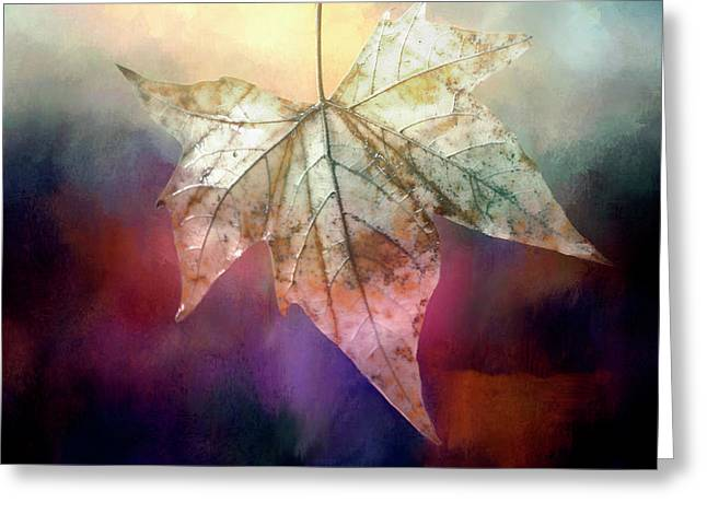 Autumn Beauty Greeting Card by Terry Davis